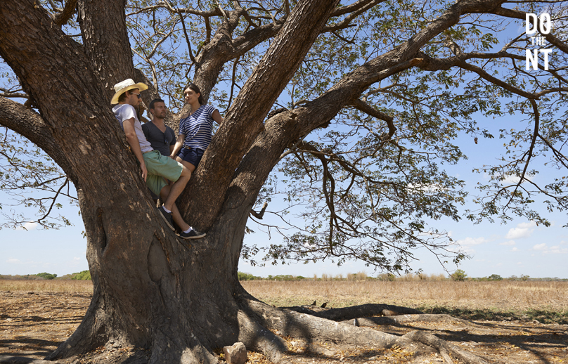 friends hanging out up a tree in the northern territory